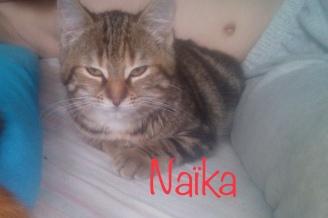 Née début septembre, elle s'est vite adaptée à la vie dedans après un début de vie difficile livrée à elle-même dehors avec 26 autres chats et chatons.