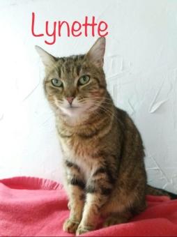 Elle a du caractère note Lynette. Elle vous demande des câlins puis râle si vous continuer quand elle en a assez ! Une chatte d'Août 2015 qui ne laisse pas indifférent.