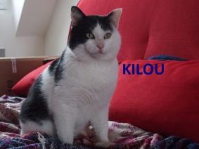 Kilou1.jpg