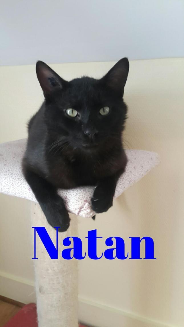 Ce mâle de mai 2017 est une bonne pâte à adopter avec d'autres chats. Il est magnifique et très attachant.