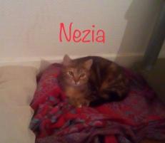 Arrivée à 4 mois avec ses soeurs Nafi et Naïka, Nézia était sauvage et méfiante. La sociabilisation a été longue. Habituée à vivre avec chats et chien, elle prend désormais pleinement part à la vie de sa famille d'accueil.