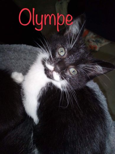 Olympe3