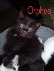 orphee3