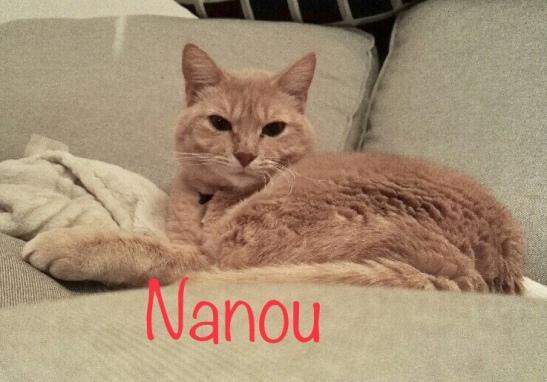 nanou2019
