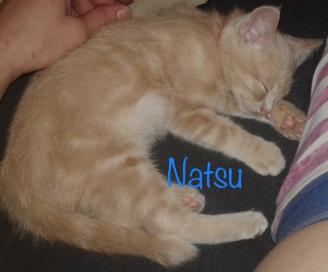 natsu0