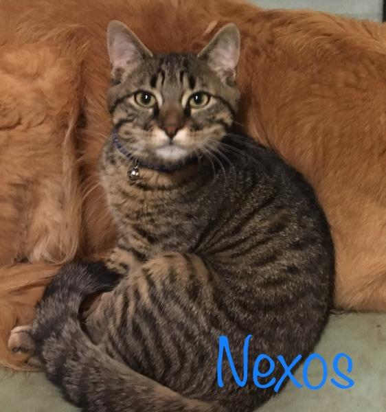 nexos0