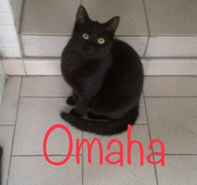Omaha01