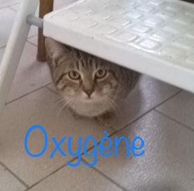 Oxygene01