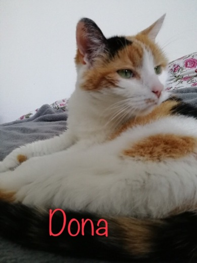 Jetée à la rue car jugée trop vieille, Dona n'a que 11 ans et recherche câlins et calme dans une famille sans autre chat.