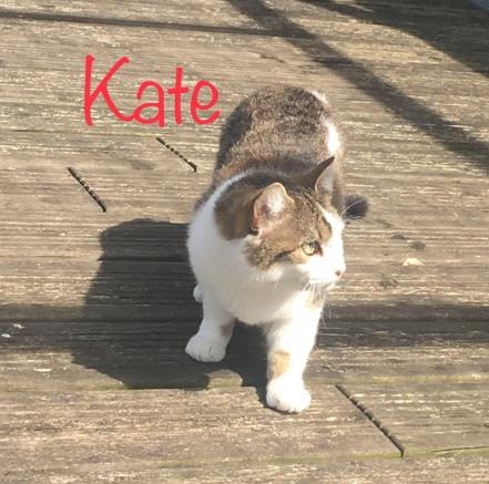 Recueillie gestante, cette chatte de mai 2017. Elle ouvrira son coeur rapidement car elle cherche le contact humain.
