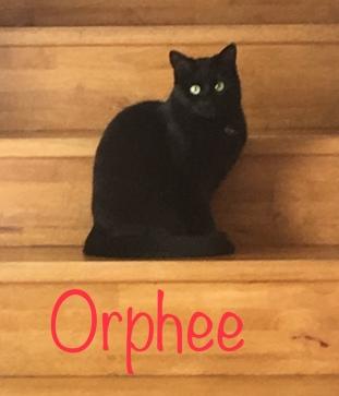 Fille de kate, et souer d'oasis avec qui elle est complice, Orphée est du 28/04/18. L'adoptant devra être patient.