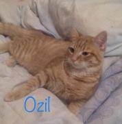 Ozil02.jpg