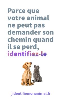 BANNIERE_Jidentifiemonanimal